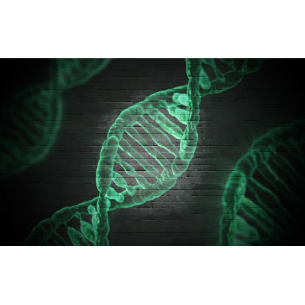 DNA, Yapısı ve Daha Fazlası