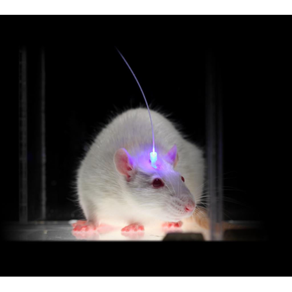 Beyin Kontrolünden Tedavisine: Optogenetik