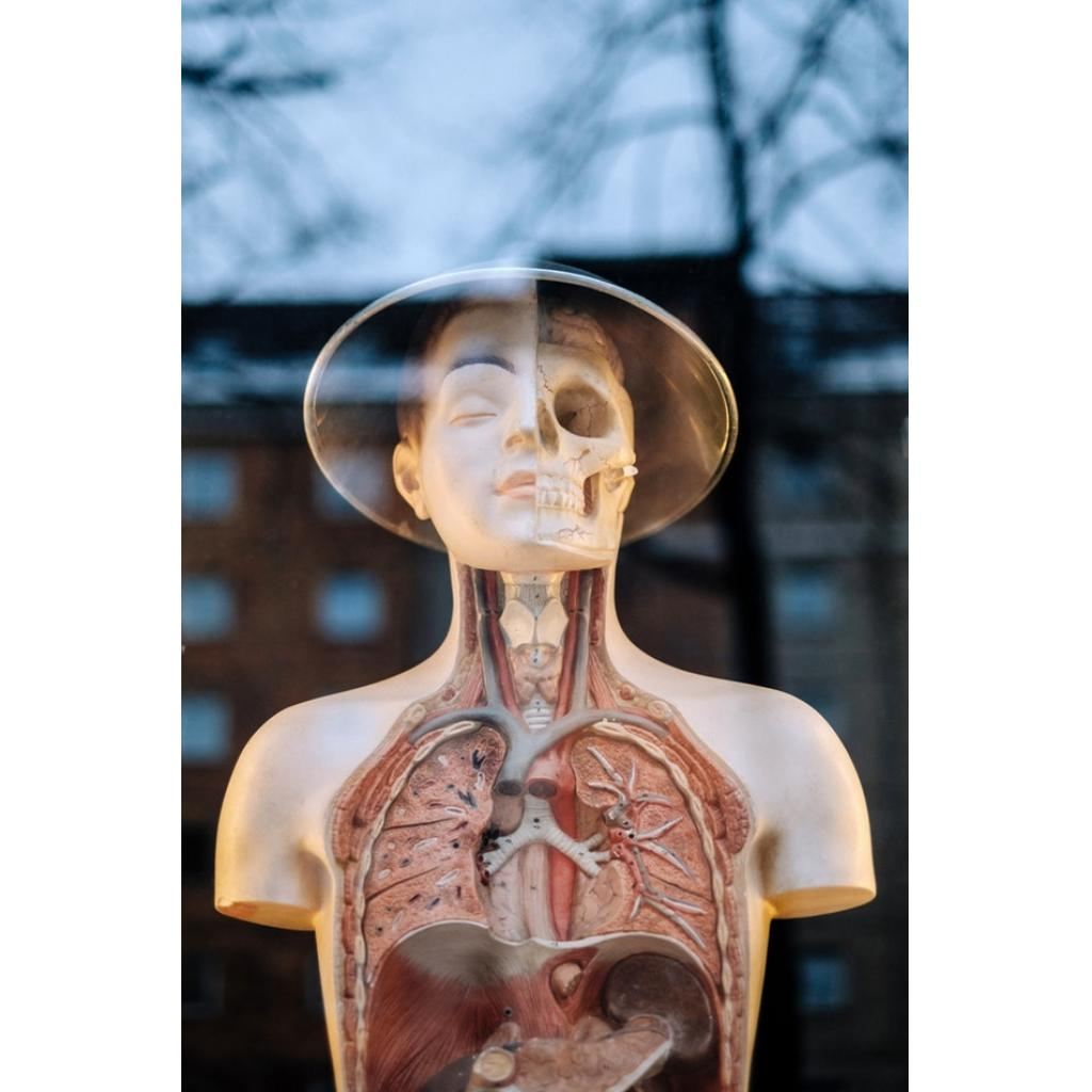 Kemik ve Yağ Sentezi