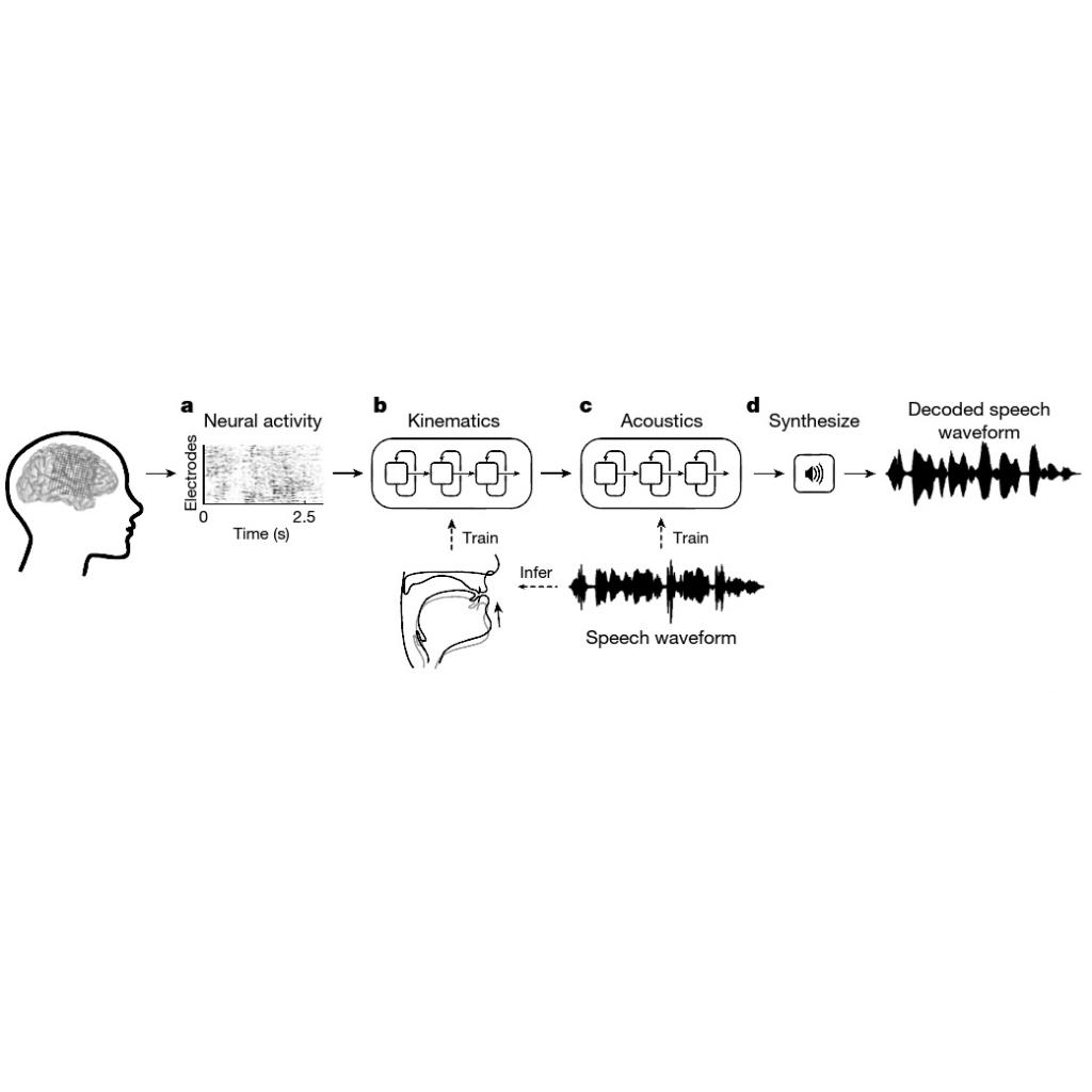 Beyin Sinyalleri Sese Dönüştü