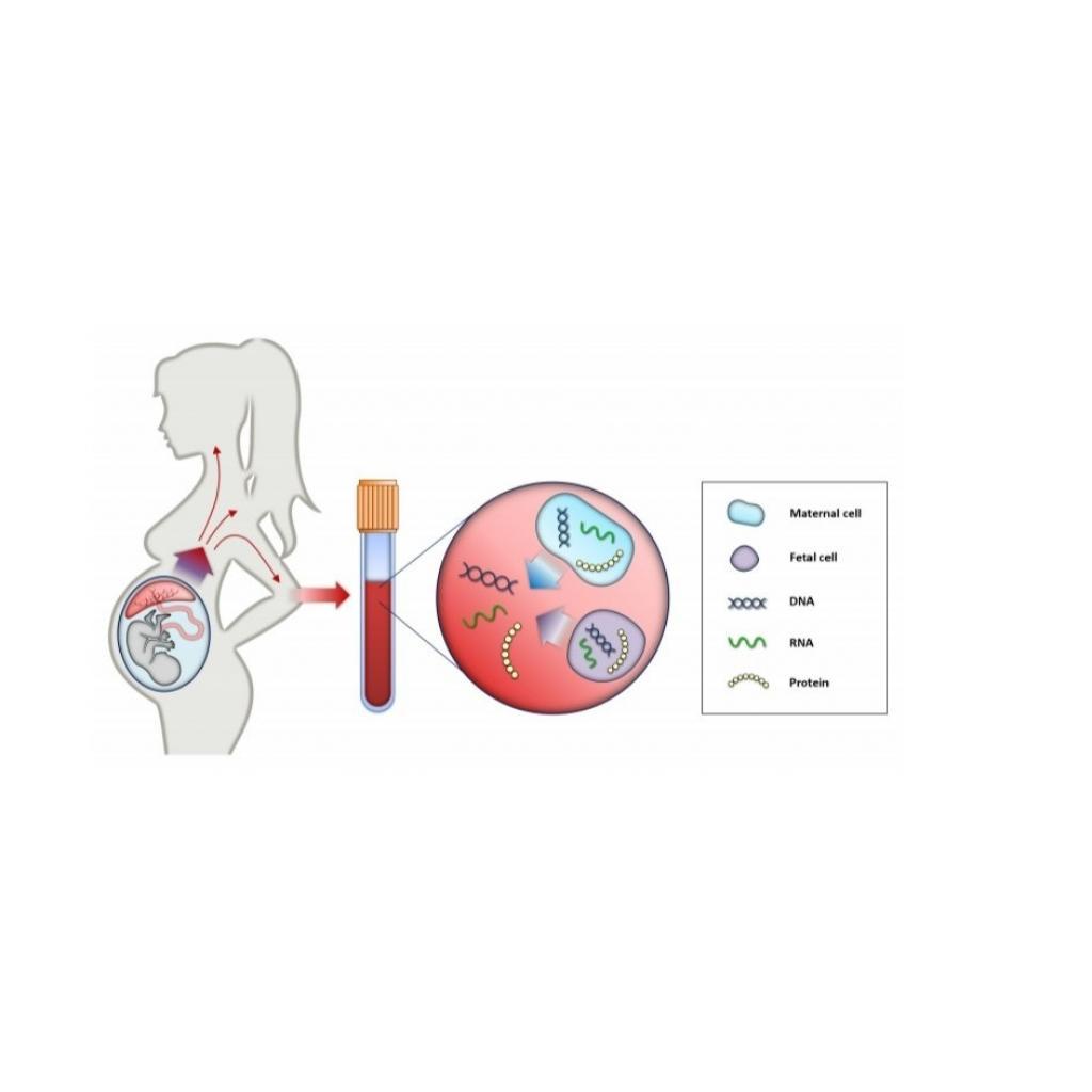 Prenatal Tarama Testi: NIPT
