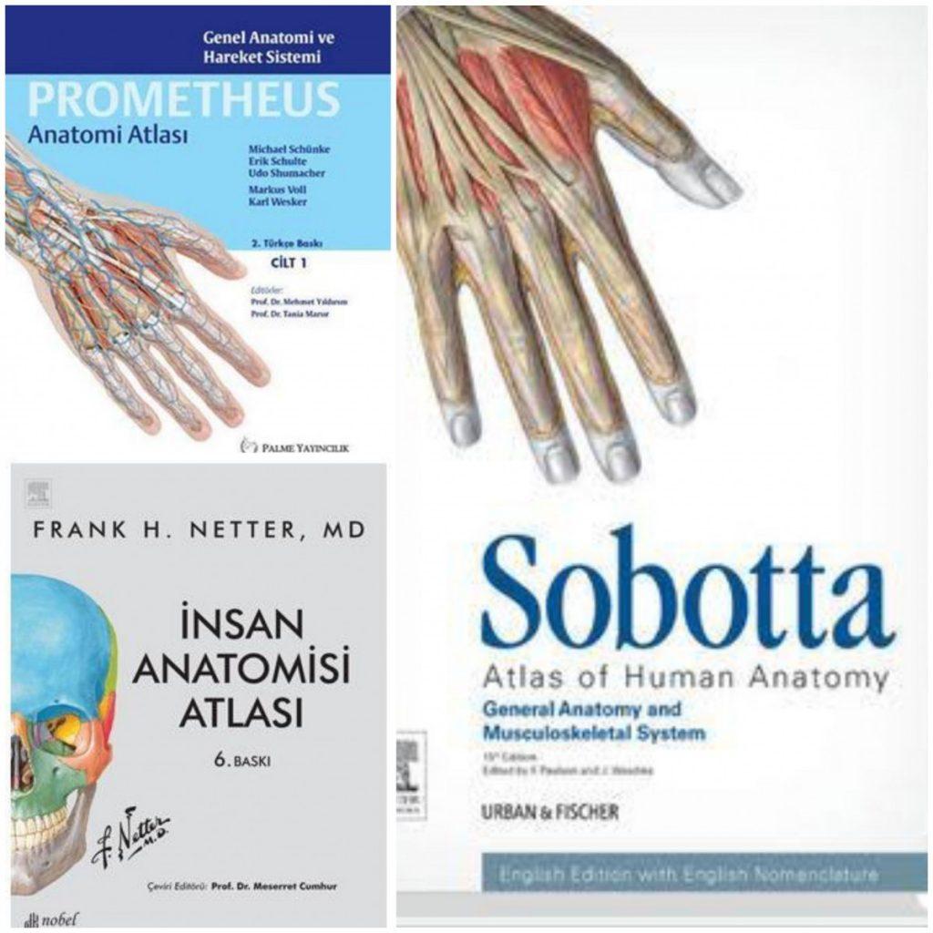 Servikal Vertebra Anatomisinin Farklı Anatomi Atlaslarında İşlenme Farklılıklar: Karşılaştırmalı Değerlendirme