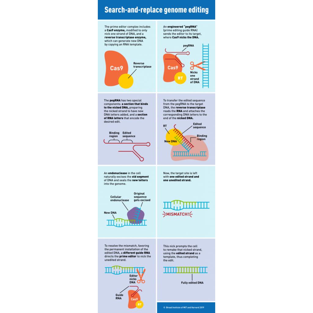 Gen Düzenleme Teknolojilerinde Yeni Bir Boyut: Prime Editing
