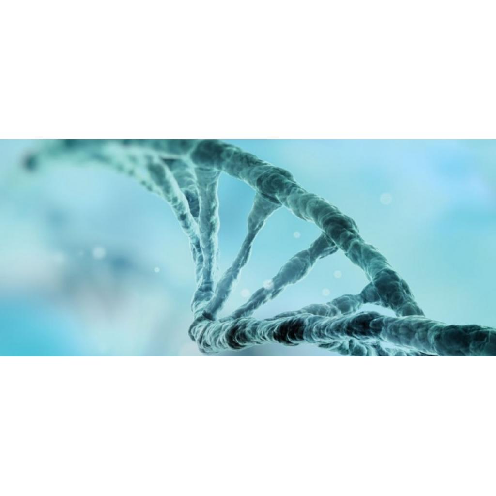 CRISPR/Cas9 Bebekler