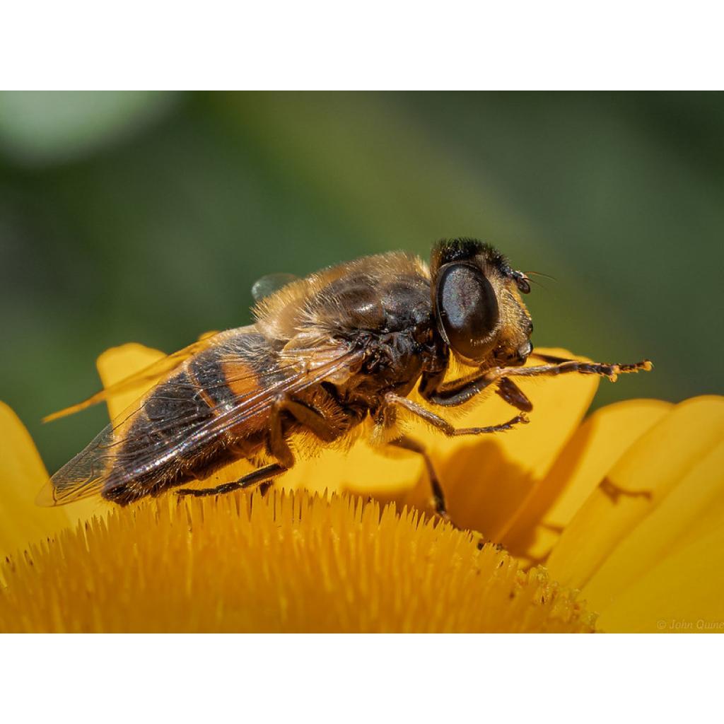 Meme Kanserinde Yeni Bir Çığır: Bal Arıları