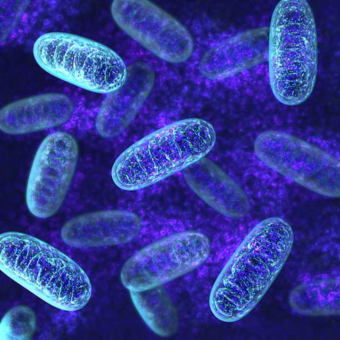 Kas Mitokondrisi
